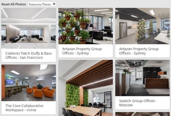 ideas para decorar una oficina plantas